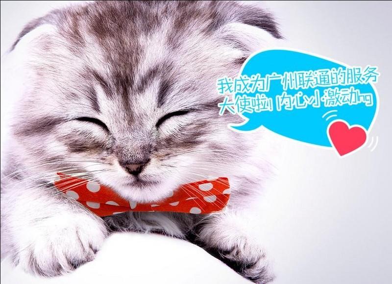 壁纸 动物 猫 猫咪 小猫 桌面 800_581