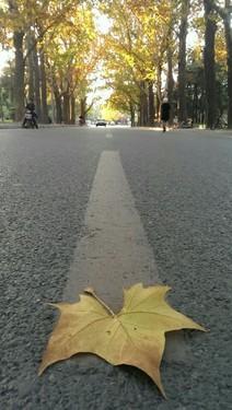 手机摄影 如何将校园小路拍出文艺范儿