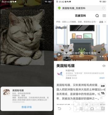 """vivo NEX宝石红评测:手机界的网""""红"""""""