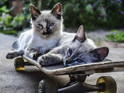 涼涼 馬德里市政府封殺共享電動滑板車
