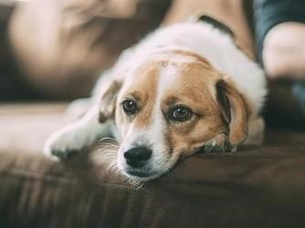 为你家的狗狗开门 一套智能设备就能搞定