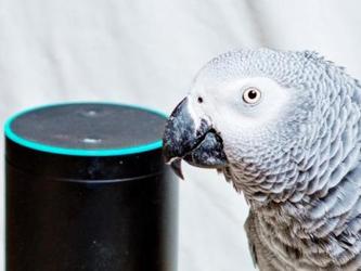 鹦鹉模仿人声 竟让Amazon Echo买水果