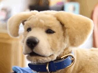 Tombot治愈系机器狗服务痴呆患者 为人类减轻焦虑