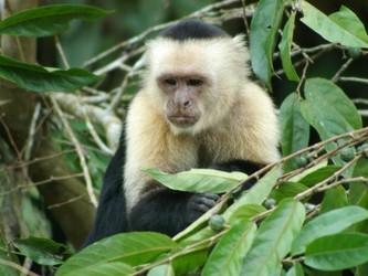 灵长类动物也会携带寨卡病毒 科学家开发AI进行识别