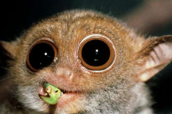 """vr技术新应用 """"眼镜猴""""带你以灵长类动物的眼睛看世界"""