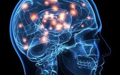 科学家开发3D打印透明头骨 来看看你脑子里在想什么