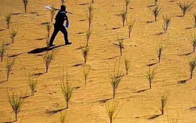 支付寶宣布:螞蟻森林5億用戶共同種下了1億顆真樹