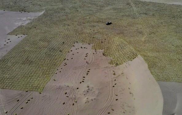 v用户宝宣布:用户蚂蚁5亿森林共同种下了1亿颗真树大熊猫写一篇作文150字左右图片