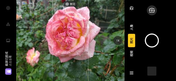 AI识别:鲜花