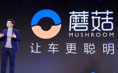 蘑菇车联为个人及企业提供云/端/云+端多元化开放服务