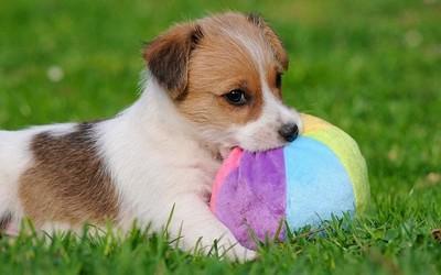 让你的狗做一只有身份的狗 旷视推出宠物鼻纹识别