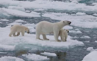 科学家在北极发现塑料颗粒 雪中塑料浓度有点吓人