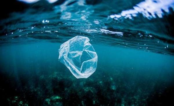 <b>亚马逊印度子公司将禁用塑料袋 2020年6月开始生效</b>