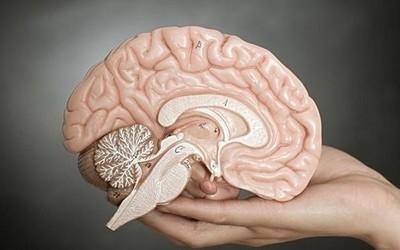 研究表明:大脑被切除掉一半并不影响人的正常生活