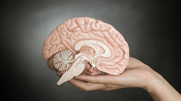 研究表明 大脑被切除掉一半并
