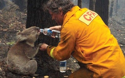 黑客组织入侵捐款平台 澳洲森林火灾善款遭到窃取