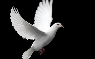 科学家使用鸽子羽毛制造人工翅膀 可以拍打如真鸟