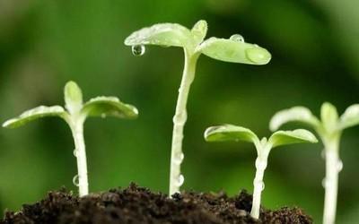 人体堆肥:外媒揭示人类丧葬新方案 对环境更加有利