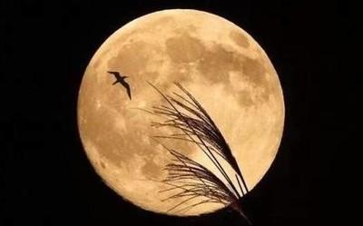 检验手机拍照能力的时候到了!4月8日将现超级月亮