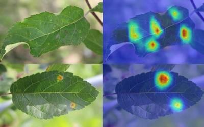 支付宝AI大幅提升细粒度图像分类识别精度 一眼看穿万物细微差异