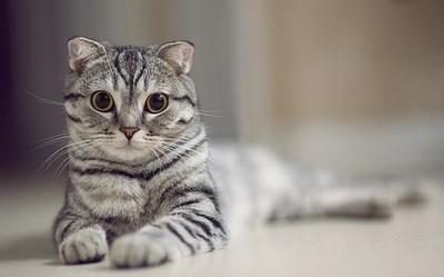 当代☆年轻人社交指南:无用社交 不�钊缪�只名叫狗的猫