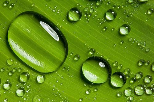 绿叶 设计 矢量